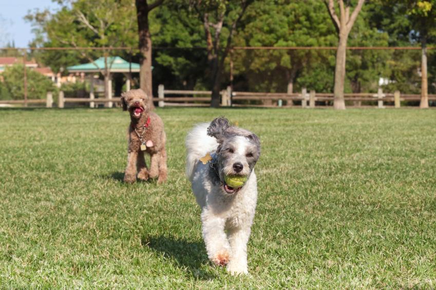 Best Off Leash Dog Parks Edmonton