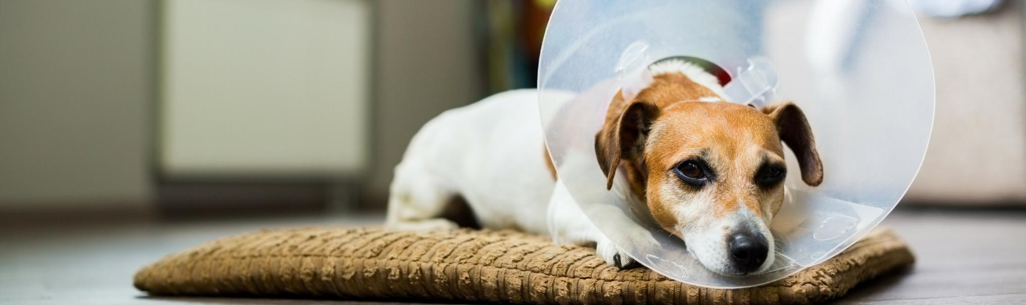 Dog spay neuter cost
