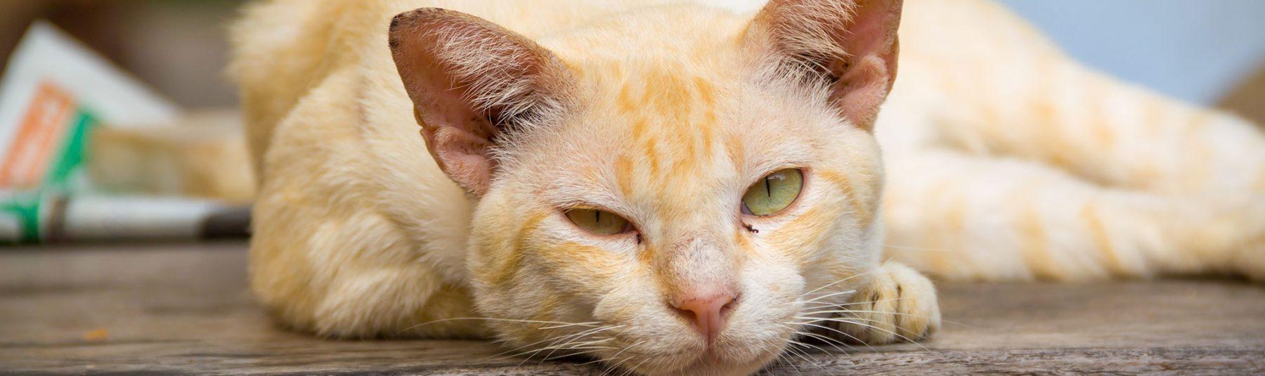 cat-senior-care