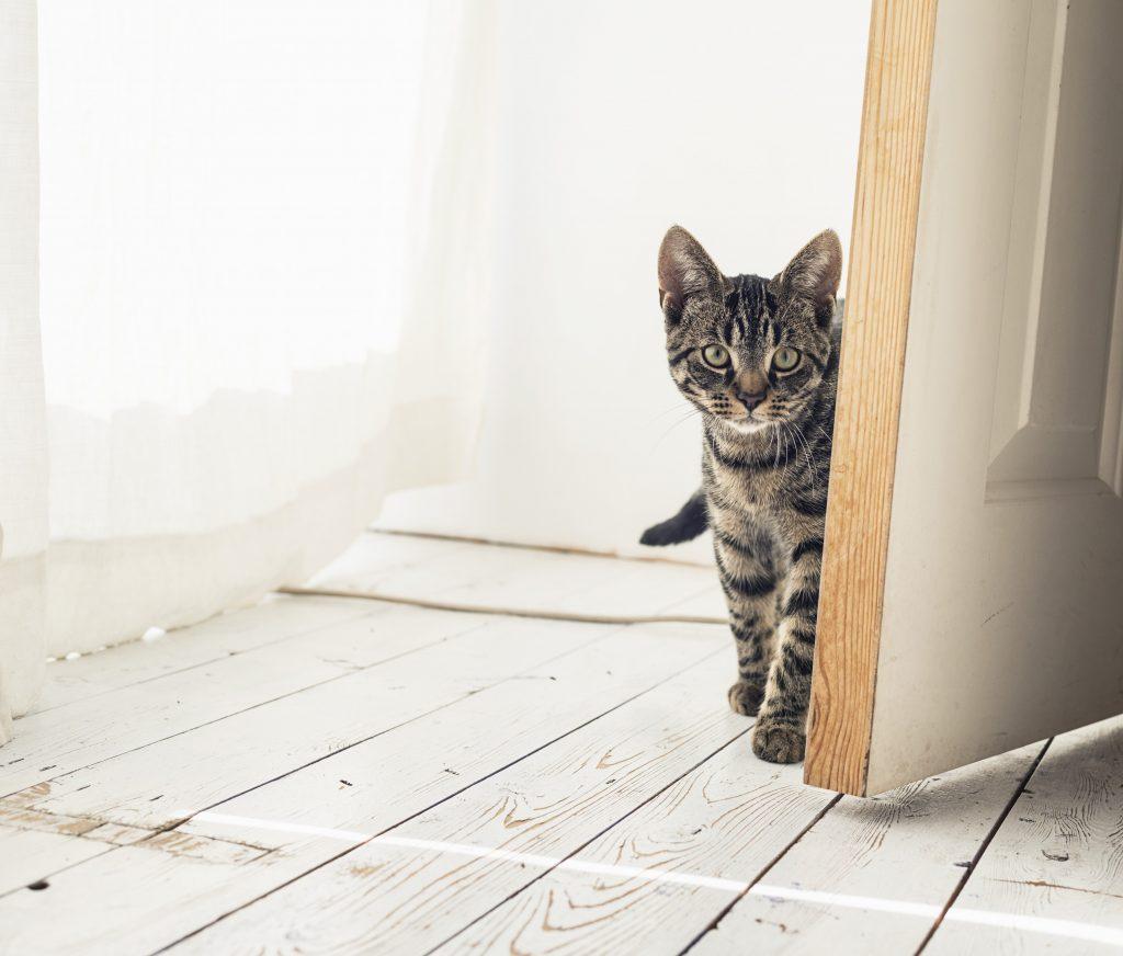 outdoor-blog-cats