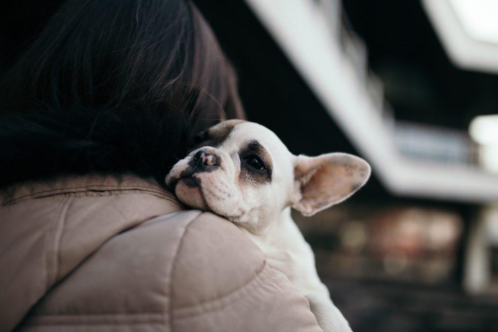 dog-blog-cough