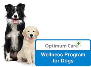 wellness-dog