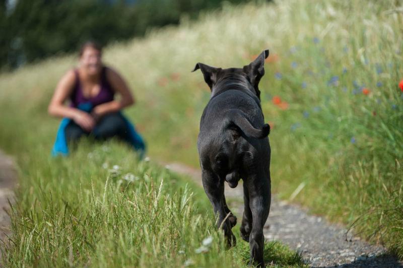 Understanding Dog Glands