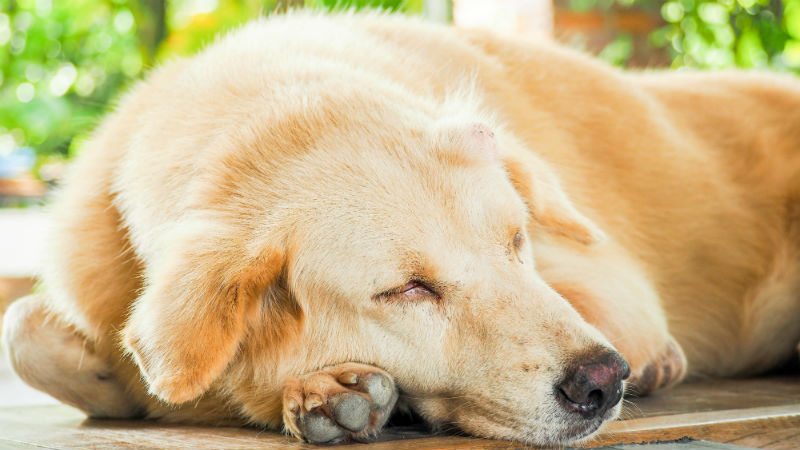 Understanding the Lumps and Bumps in Your Pets